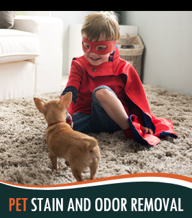 Removing Stains & Odor